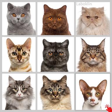 Laboklin cat breeds