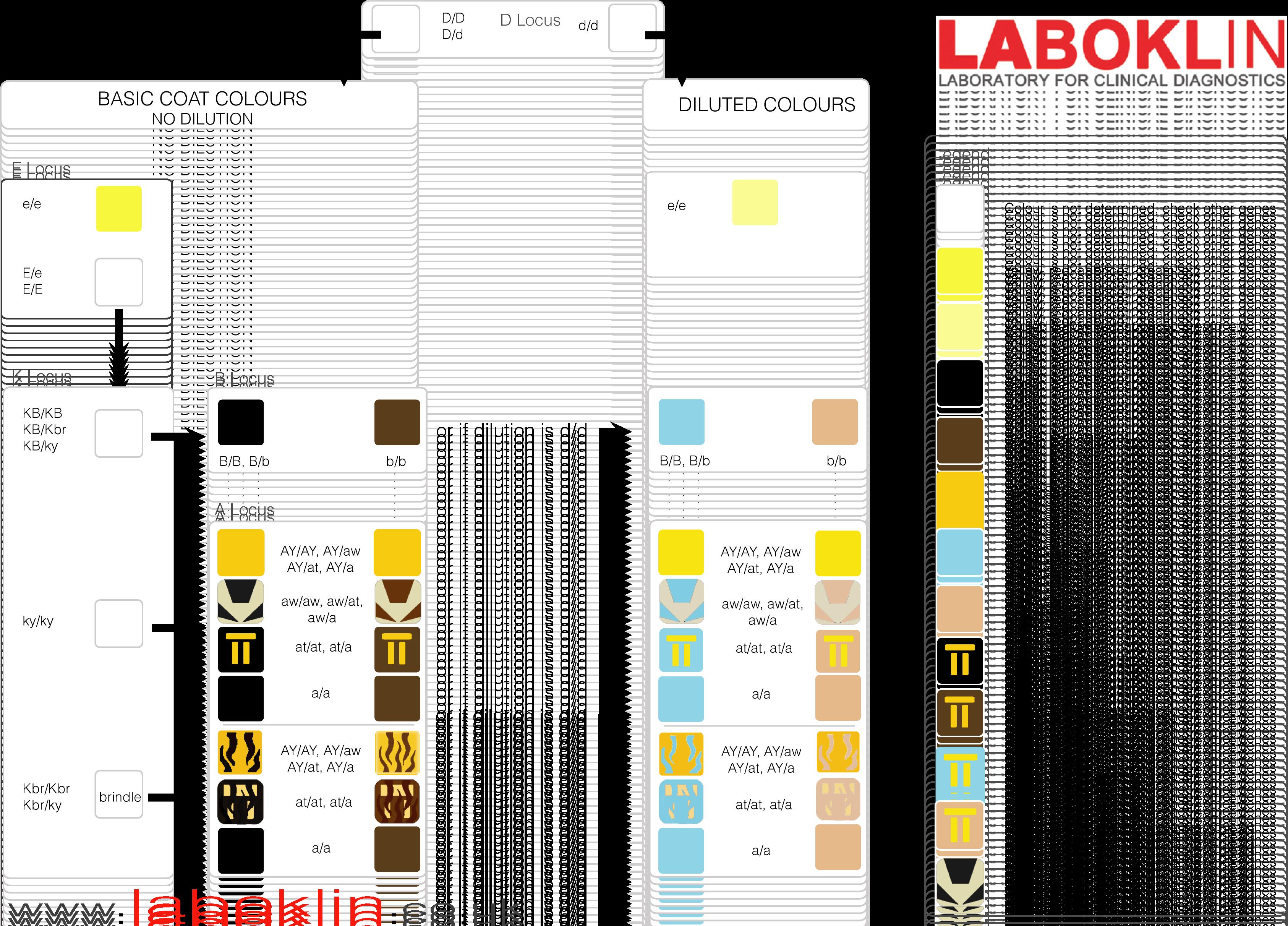 Coat Colour Inheritance Chart 1