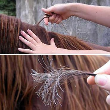 how to obtain a hair sample