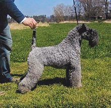 LABOKLIN (UK)| Genetic Diseases | Dogs| CMSD (Canine Multiple System